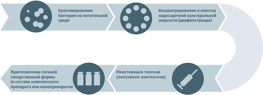Блок-схема производства анатоксинов