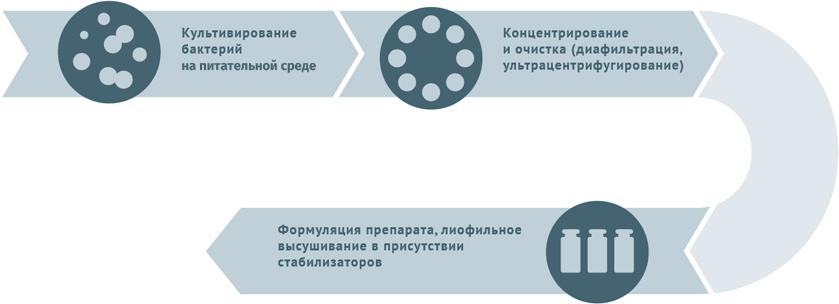 Блок-схема производства живых бактериальных вакцин