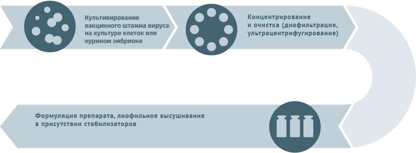 Блок-схема производства живых противовирусных вакцин
